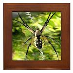 Garden Spider Awaits sq Framed Tile