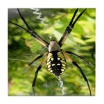 Garden Spider Awaits sq Tile Coaster