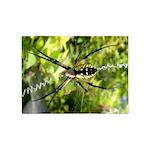 Garden Spider Awaits sq 5'x7'Area Rug