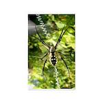 Garden Spider Awaits sq 3'x5' Area Rug