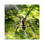 Garden Spider Awaits sq Queen Duvet