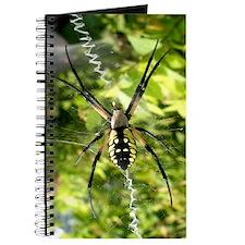 Garden Spider Awaits sq Journal