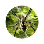 Garden Spider Awaits sq 3.5