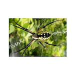 Garden Spider Awaits sq Magnets