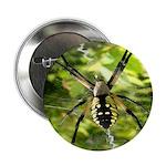 Garden Spider Awaits sq 2.25