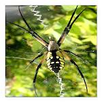 Garden Spider Awaits sq Square Car Magnet 3