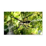 Garden Spider Awaits sq Rectangle Car Magnet