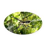 Garden Spider Awaits sq Oval Car Magnet