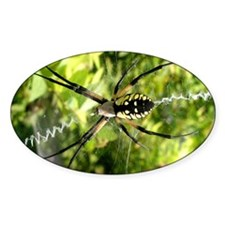Garden Spider Awaits sq Sticker