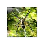 Garden Spider Awaits sq Sticker