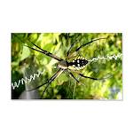 Garden Spider Awaits sq Wall Decal