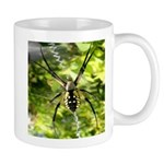 Garden Spider Awaits sq Mugs
