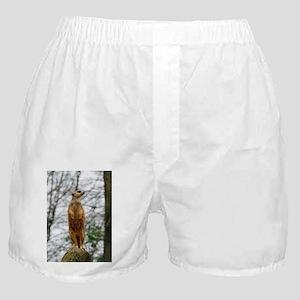 Meerkat 09 Boxer Shorts