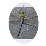 Dragonfly on Pavement Ornament (Oval)