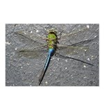 Dragonfly on Pavement Postcards (Package of 8)