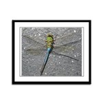 Dragonfly on Pavement Framed Panel Print