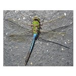Dragonfly on Pavement Posters