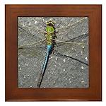 Dragonfly on Pavement Framed Tile