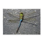 Dragonfly on Pavement 5'x7'Area Rug