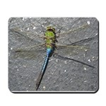 Dragonfly on Pavement Mousepad