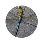 Dragonfly on Pavement 3.5