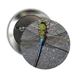 Dragonfly on Pavement 2.25