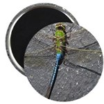 Dragonfly on Pavement Magnets