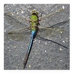 Dragonfly on Pavement Square Car Magnet 3