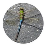 Dragonfly on Pavement Round Car Magnet