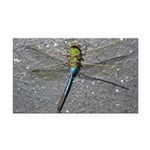 Dragonfly on Pavement Rectangle Car Magnet
