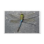 Dragonfly on Pavement Car Magnet 20 x 12