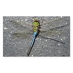 Dragonfly on Pavement Sticker