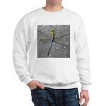 Dragonfly on Pavement Sweatshirt
