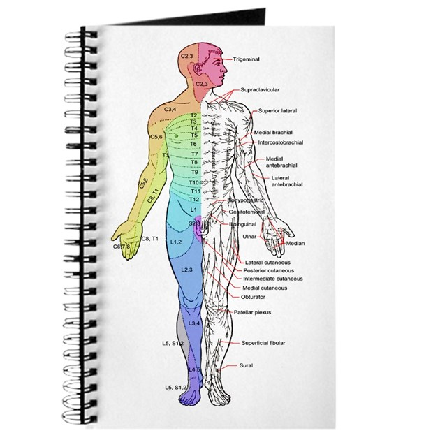 Human Anatomy Dermatomes And Cutaneous Ner Journal By Bestsellingts