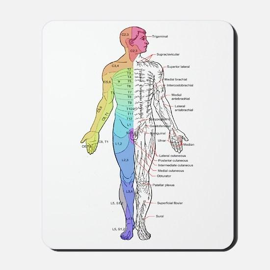 Human Anatomy Dermatomes and Cutaneous N Mousepad