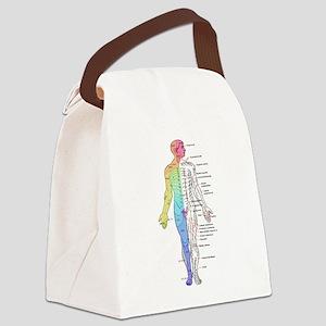 Human Anatomy Dermatomes and Cuta Canvas Lunch Bag