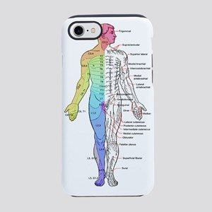 Human Anatomy Dermatomes and C iPhone 7 Tough Case