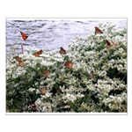 Monarchs on a Babys Breath Rest stop Posters