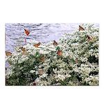 Monarchs on a Babys Breath Rest stop Postcards (Pa