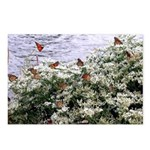 Monarchs on a Babys Breath Rest stop Postcards (Pa