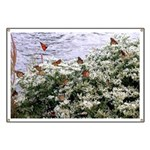 Monarchs on a Babys Breath Rest stop Banner