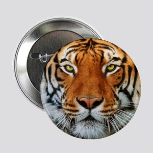 """Tiger in Water Photograph 2.25"""" Button"""