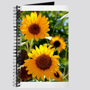 Sunflowers Old Town Albuquerque Journal