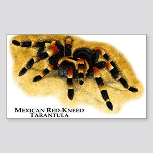 Mexican Red-Kneed Tarantula Rectangle Sticker