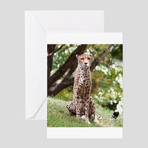 Watching Cheetah Greeting Cards