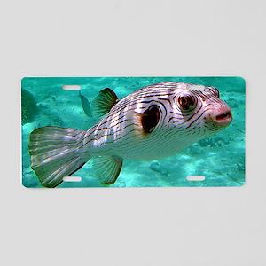 Striped Puffer Fish Aluminum License Plate