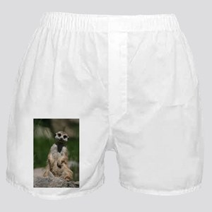 Meerkat048 Boxer Shorts