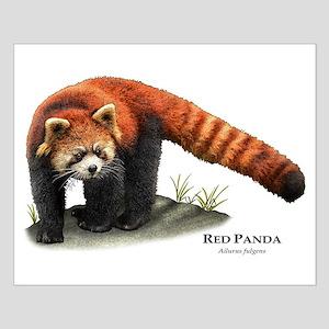 Red Panda Small Poster