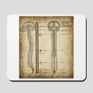 Spinal Chakra Chart Mousepad