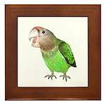 Cape Parrot 1 Framed Tile